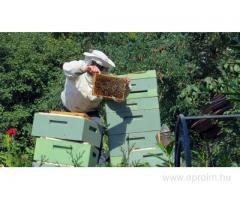 Méhész OKJ-s tanfolyam Győrben