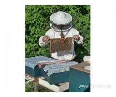 Méhész OKJ-s tanfolyam Nagykanizsán