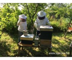 Méhész OKJ-s tanfolyam Veszprémben
