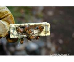 Méhész OKJ-s tanfolyam Celldömölkön
