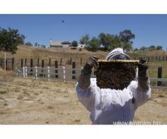 Méhész OKJ-s tanfolyam Szombathelyen